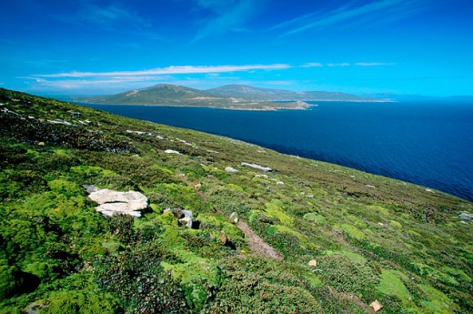 Feldmark habitat (cushion plant communities). Saunders Island. Falkland Islands : Stock Photo