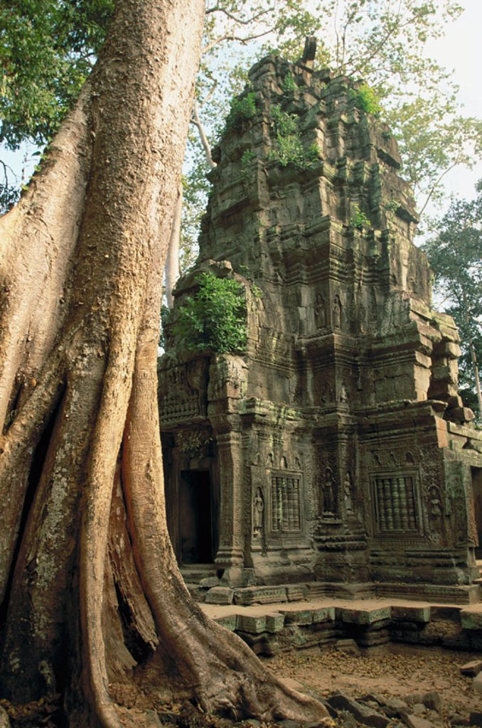 Stock Photo: 1566-090060 Ta Prohm temple, complex of Angkor Wat. Angkor. Cambodia