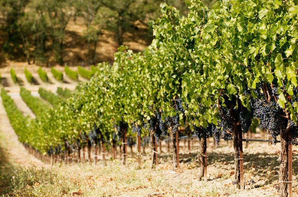 Stock Photo: 1566-091238 Joseph Phelps Winery in Napa Valley. California, USA