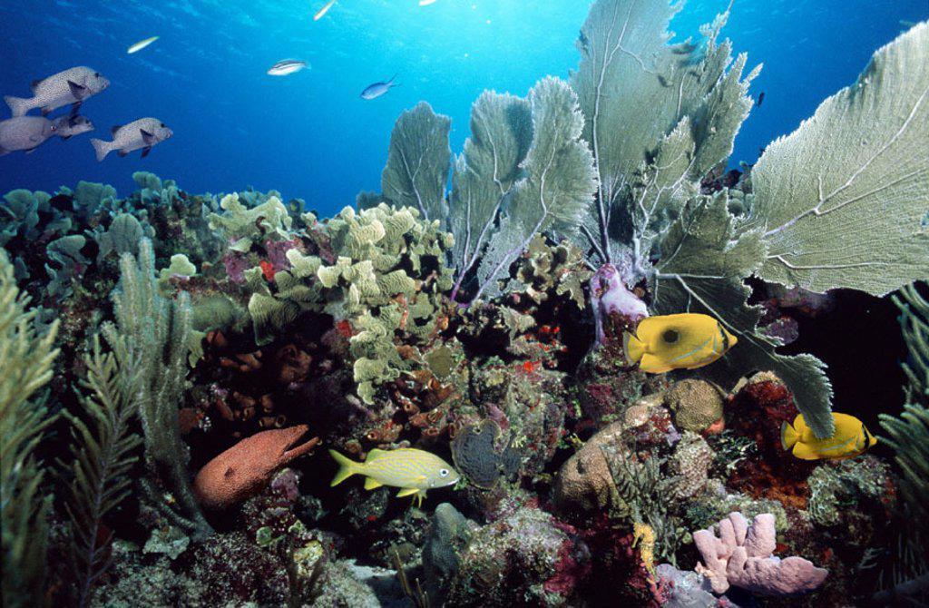 Coral Reef Scene : Stock Photo