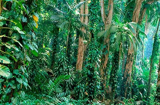 Tropical forest. Mahé Island. Seychelles : Stock Photo