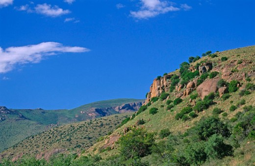 Mountain Zebra National Park. South Africa : Stock Photo