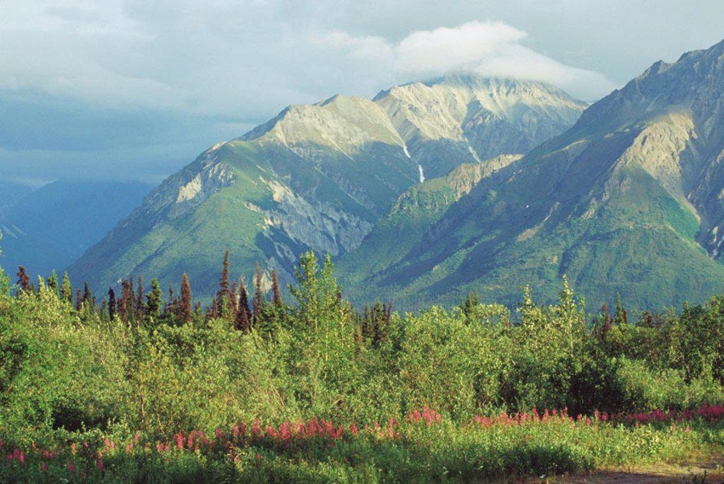 Matanuska Valley. Alaska. USA : Stock Photo