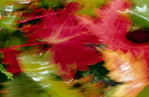 Blurred Autumn leaves : Stock Photo