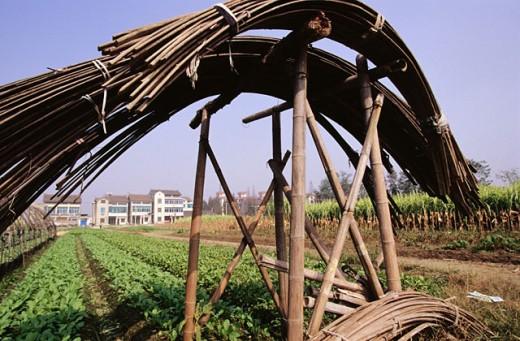 Farming. Hangzhov. Zhejiang. China : Stock Photo