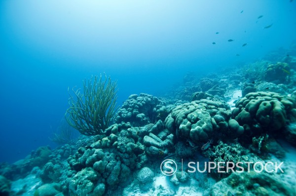 Underwater landscape at Bonaire with sea rod and corals, Dutch Antilles : Stock Photo