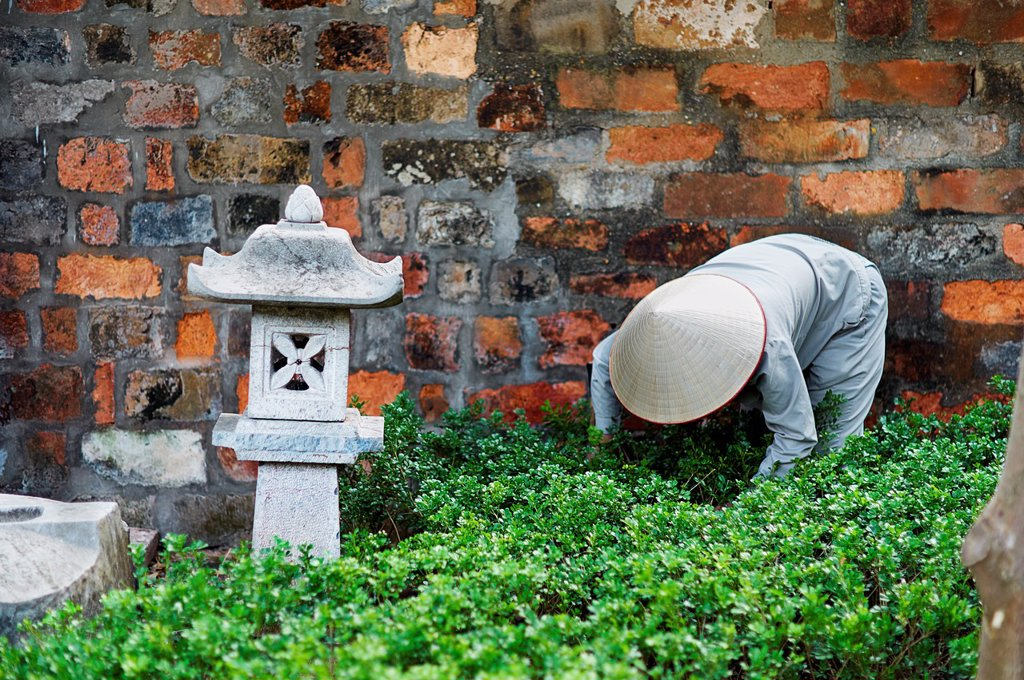 Stock Photo: 1566-1008585 A worker tending plants in a traditional garden