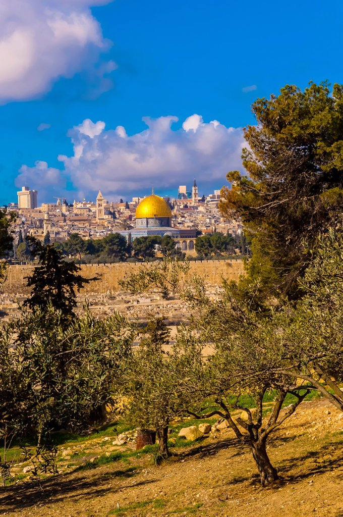 Stock Photo: 1566-1016953 Olive trees, Mount of Olives, with the Dome of the Rock on the Temple Mount in background, Jerusalem, Israel