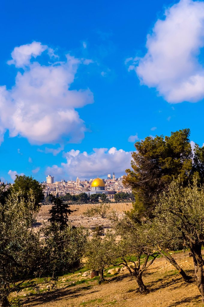 Stock Photo: 1566-1016954 Olive trees, Mount of Olives, with the Dome of the Rock on the Temple Mount in background, Jerusalem, Israel