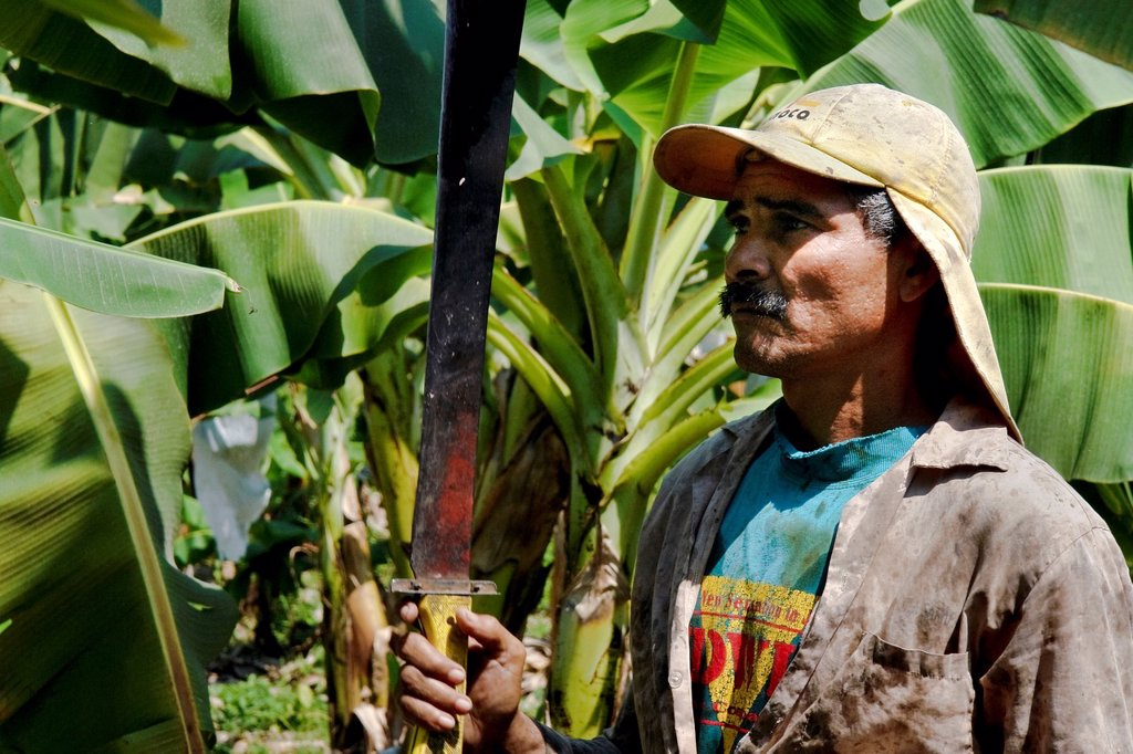 Stock Photo: 1566-1017892 A Colombian worker with machete on the banana plantation in Aracataca, Colombia, 14 March 2006  Eighty percent of the exported bananas in the world are grown in Latin America  Local farms have no other alternative than to sell for a price offered by the m. A Colombian worker with machete on the banana plantation in Aracataca, Colombia, 14 March 2006  Eighty percent of the exported bananas in the world are grown in Latin America  Local farms have no other alternative than to sell for a price offe