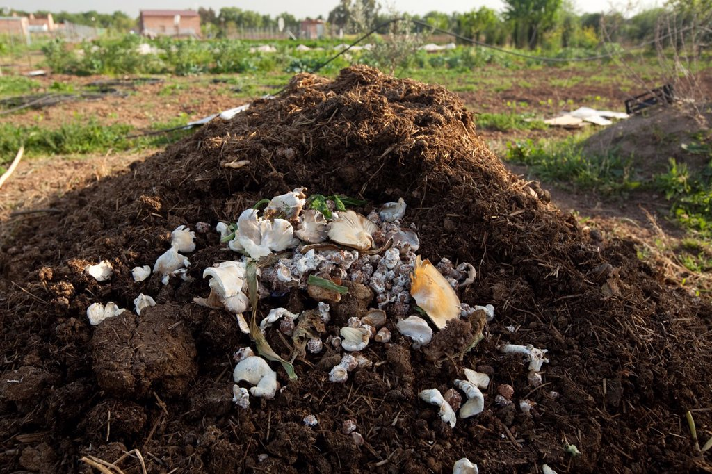 pile of excrement and mushrooms to compost and fertilize the soil, Cordoba, Andalusia, Spain, Europe : Stock Photo