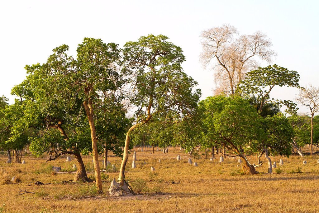 Stock Photo: 1566-1028597 Brazil, Mato Grosso, Pantanal area, Landscape in a fazenda.