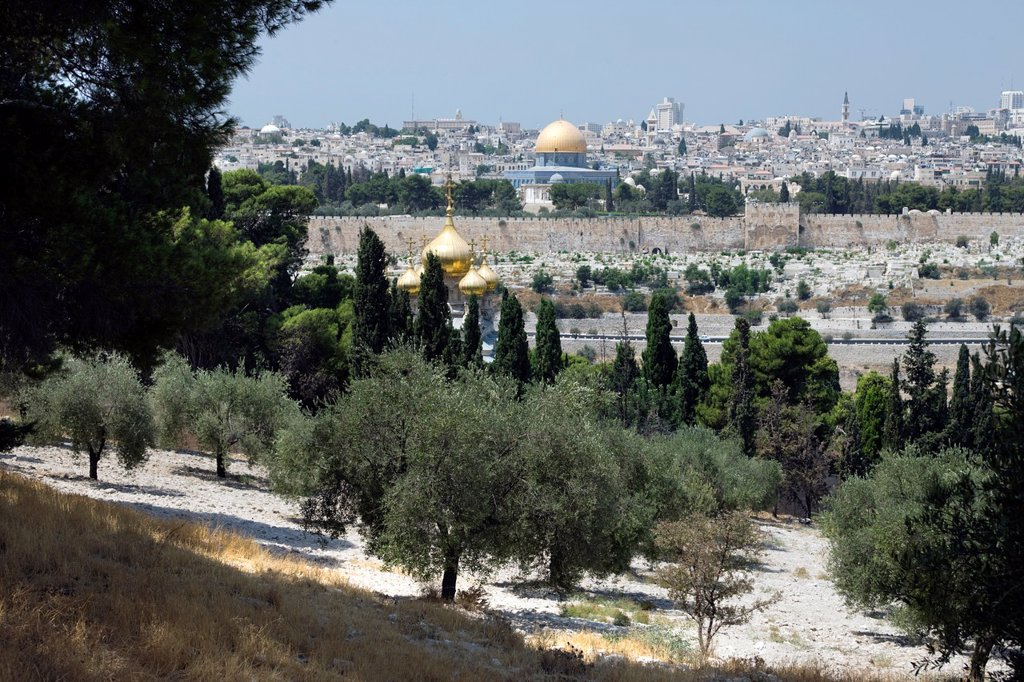 Stock Photo: 1566-1032116 OLIVE GROVE MOUNT OF OLIVES OLD CITY JERUSALEM ISRAEL
