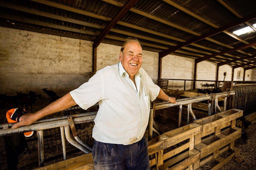 Jaume Pons, brioche cheese artesanall Binibeca - Designation of Origin Mahon-farm artisan Alcaiduset, Alaior, Menorca, Balearic Islands, Spain, Europe : Stock Photo