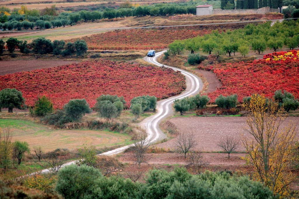 Stock Photo: 1566-1034508 Vines and olive trees, Jubera valley, Rioja wine region, Spain, Europe