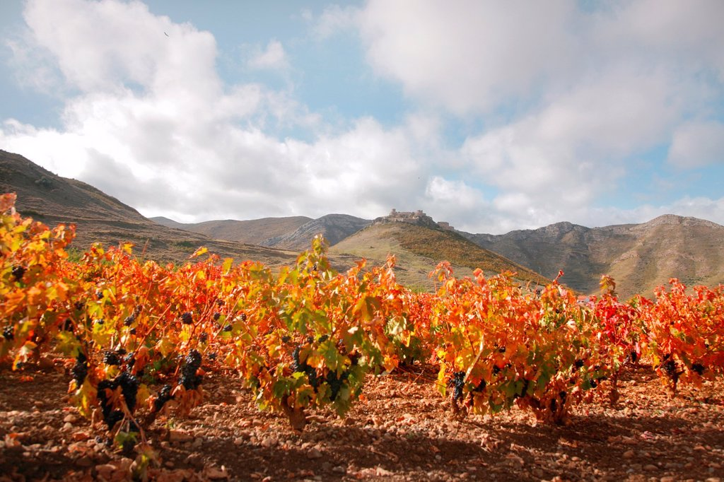 Stock Photo: 1566-1034510 Vines and Jubera castle, Jubera valley, Rioja wine region, Spain, Europe