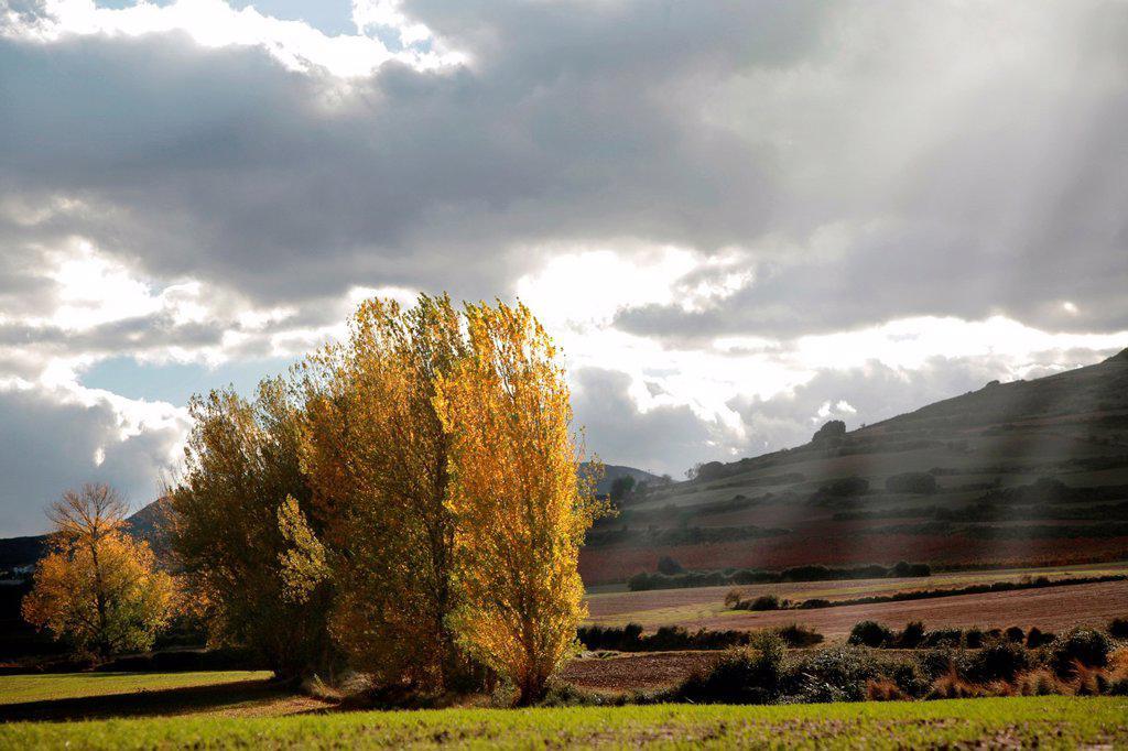 Ocon valley, Rioja wine region, La Rioja, Spain : Stock Photo