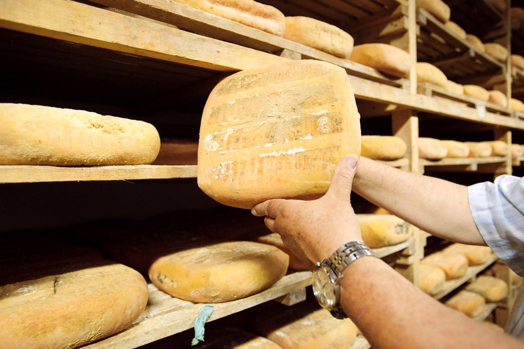 Stock Photo: 1566-1037417 Hand-made cheese Binigarba - denomination of origin Mahon craftsman-farm Binigarba, Ciutadella, Menorca, Balearic Islands, Spain, Europe