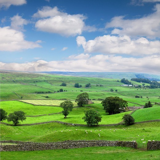 A summer day in Wensleydale, North Yorkshire, England  Photo shows the fields divided by the dry stone walls for which the area is famous  ***two frames stitched*** : Stock Photo