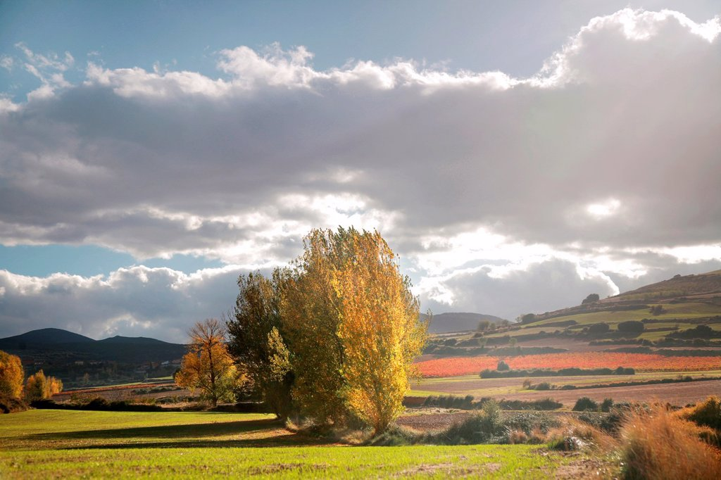 Stock Photo: 1566-1042995 Ocon valley, Rioja wine region, Spain