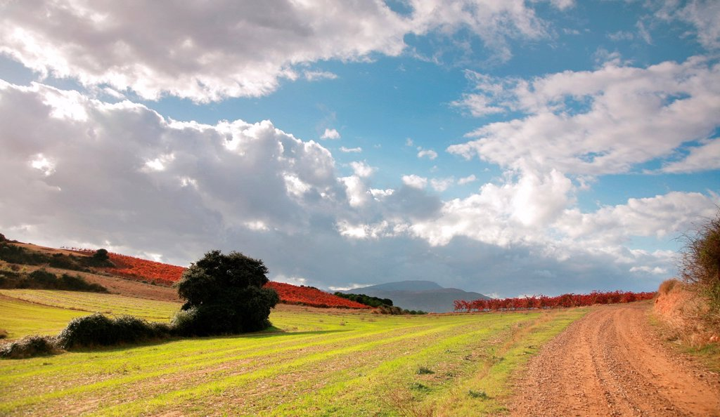 Stock Photo: 1566-1042996 Ocon valley, Rioja wine region, Spain