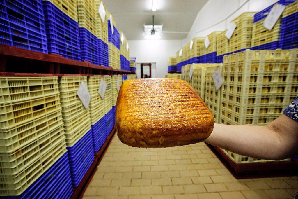 Stock Photo: 1566-1051429 Manufacture of cheese - denomination of origin Alcaidus Mahon estate, Alaior, Menorca, Balearic Islands, Spain, Europe