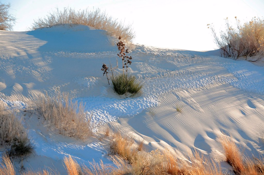 Stock Photo: 1566-1053457 White Sands National Monument, Alamogordo, New Mexico, USA