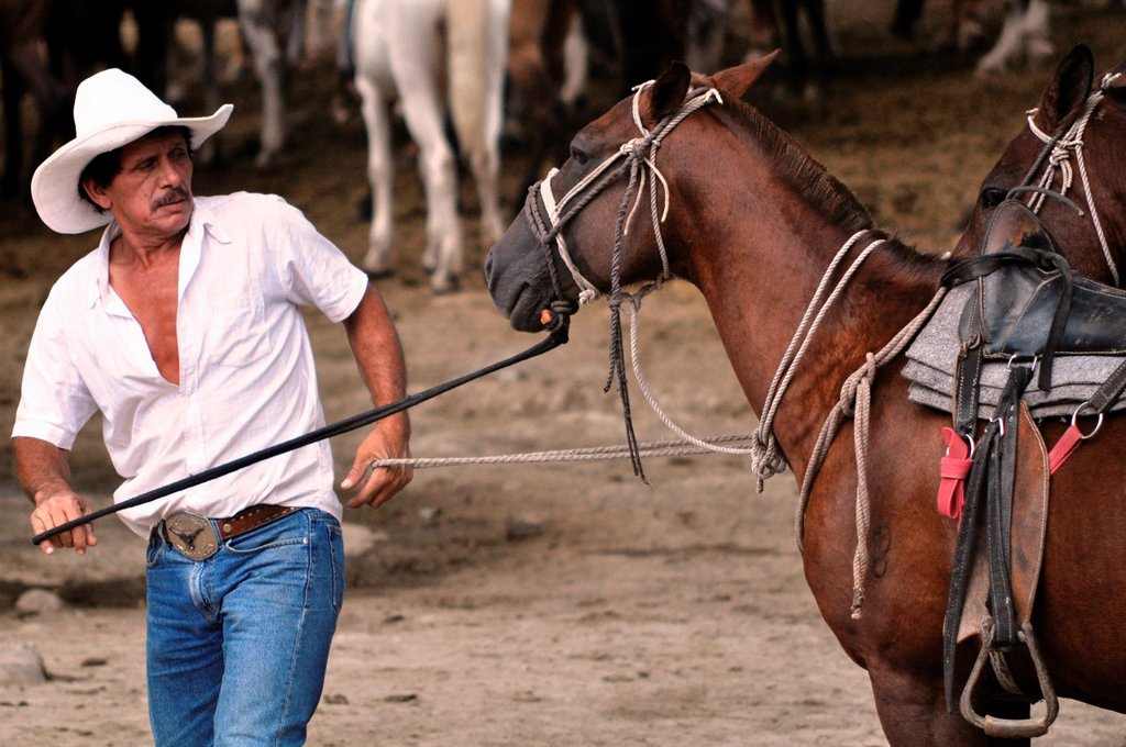 Stock Photo: 1566-1055183 'Cowboy' preparing a horse for tourists at Buena Vista Lodge, near Liberia, Guanacaste Costa Rica