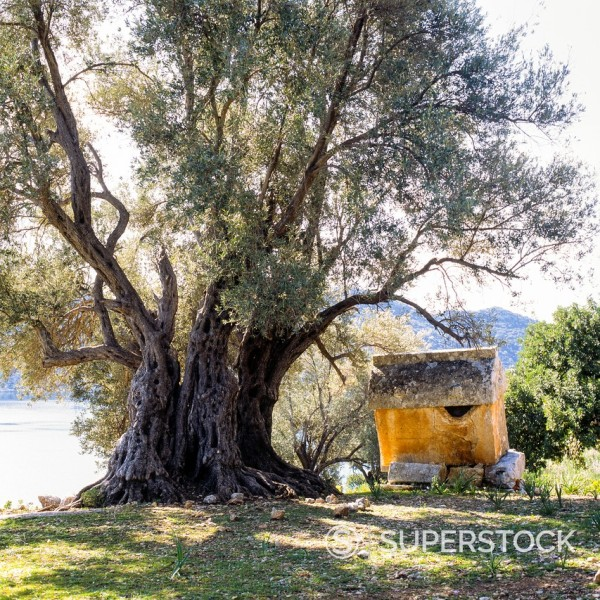 Stock Photo: 1566-1055313 Lycian Rock Tomb and ancient olive tree, Kaleköy, Üçagiz Teimiussa, Antalya Province, Turkey