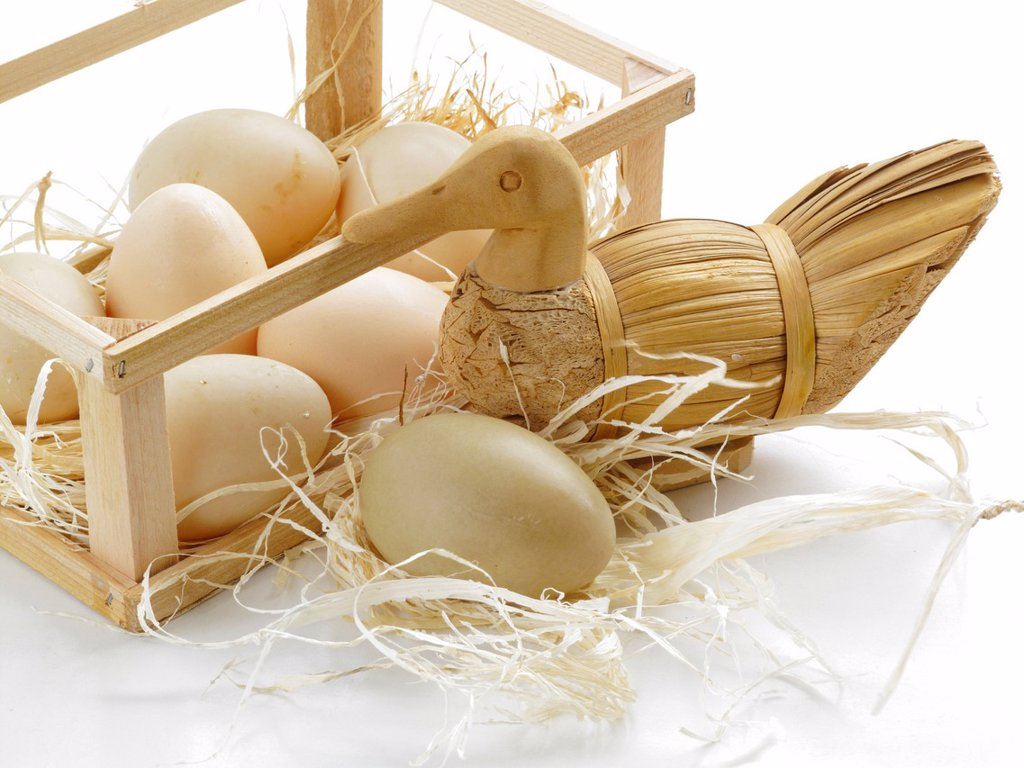Stock Photo: 1566-1057403 Duck and goose eggs