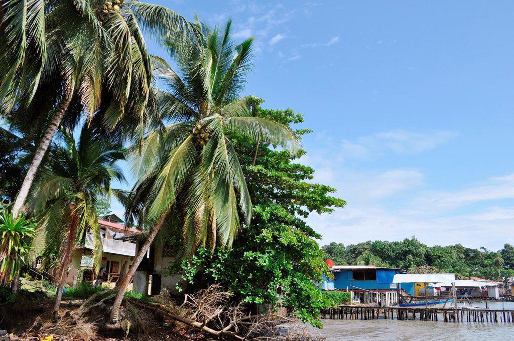 Stock Photo: 1566-1061496 Bocas del Toro Panama: Isla Bastimentos