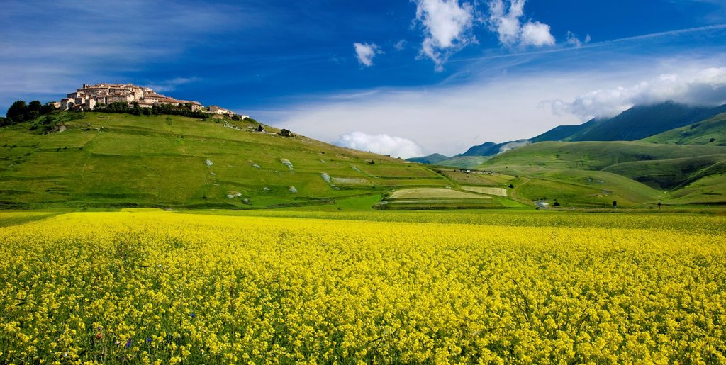 Stock Photo: 1566-1064073 Acres of yellow wildflowers below the medieval town of Castelluccio in the Piano Grande, Umbria Italy
