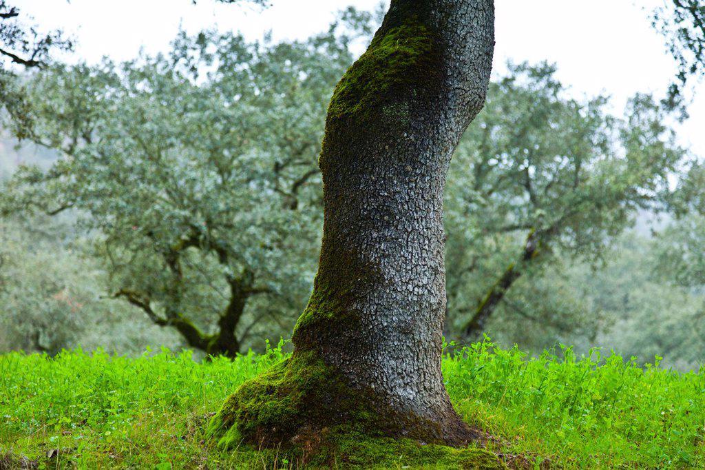 Sierra de Aracena Natural Park, Huelva, Andalucia, Spain, Europe : Stock Photo