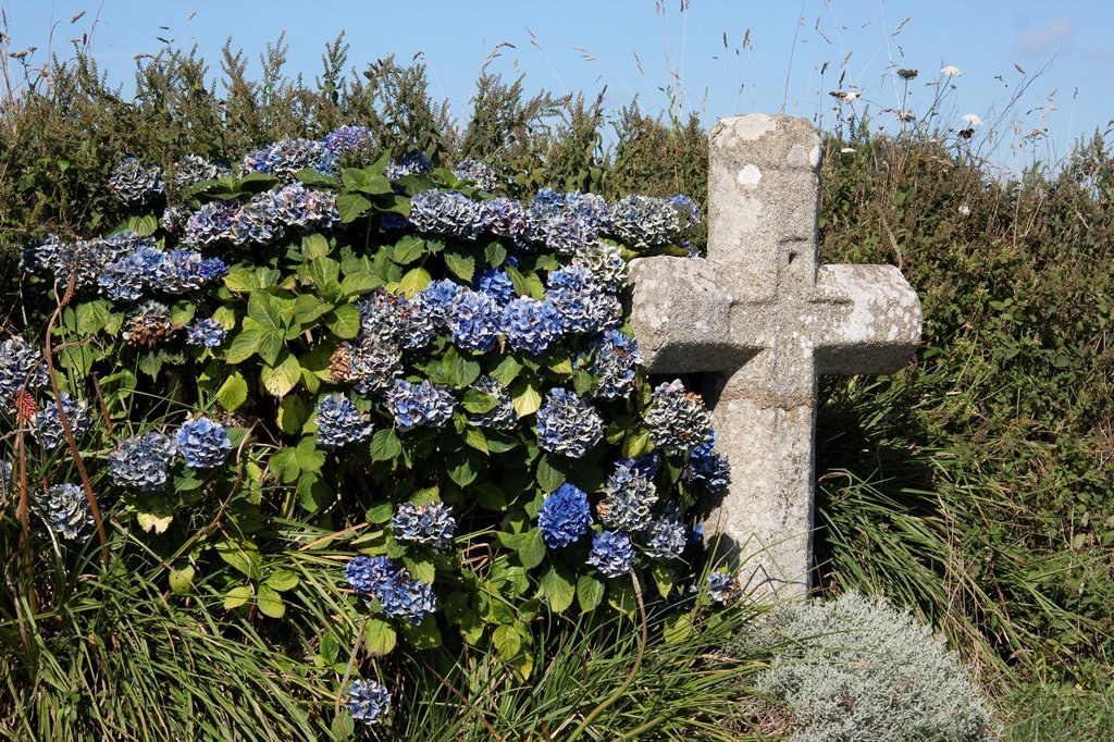 Calvary and hydrangeas in Northern Finistère, Brittany, France : Stock Photo