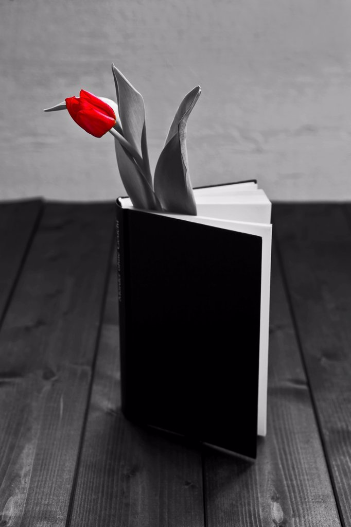 Stock Photo: 1566-1070239 a tulip in a book