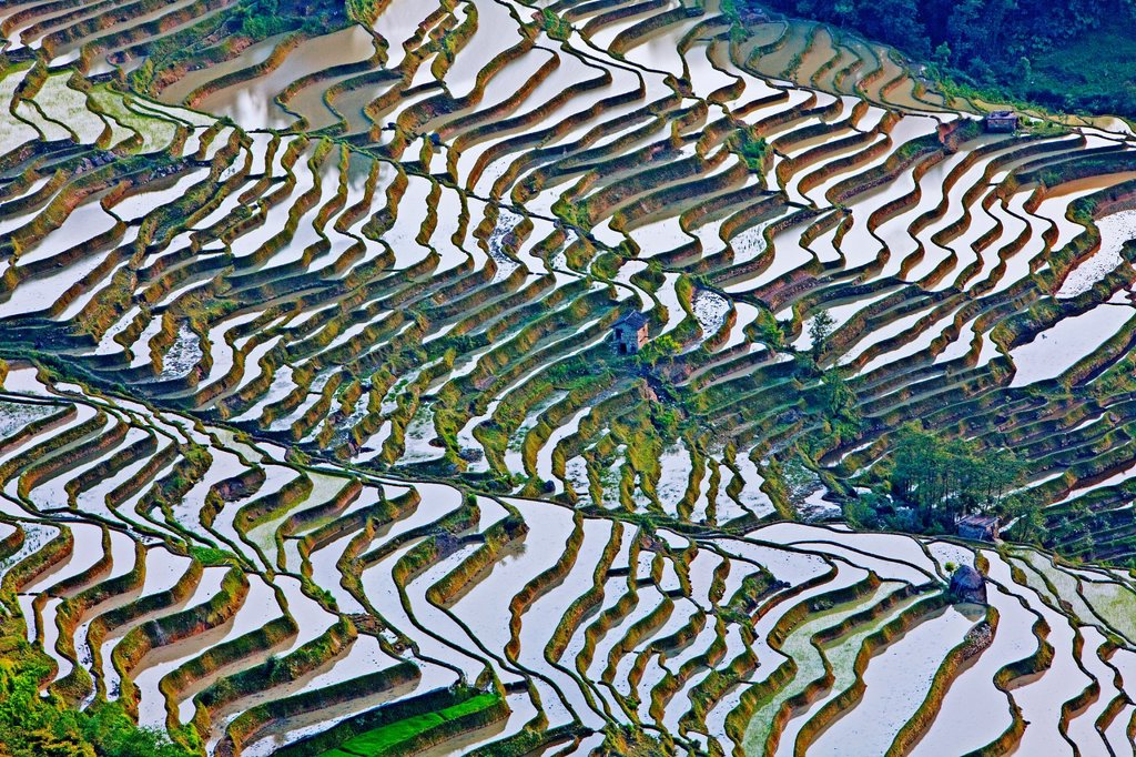 Stock Photo: 1566-1070978 Rice terraces, Yuanyang,Yunnan, China,