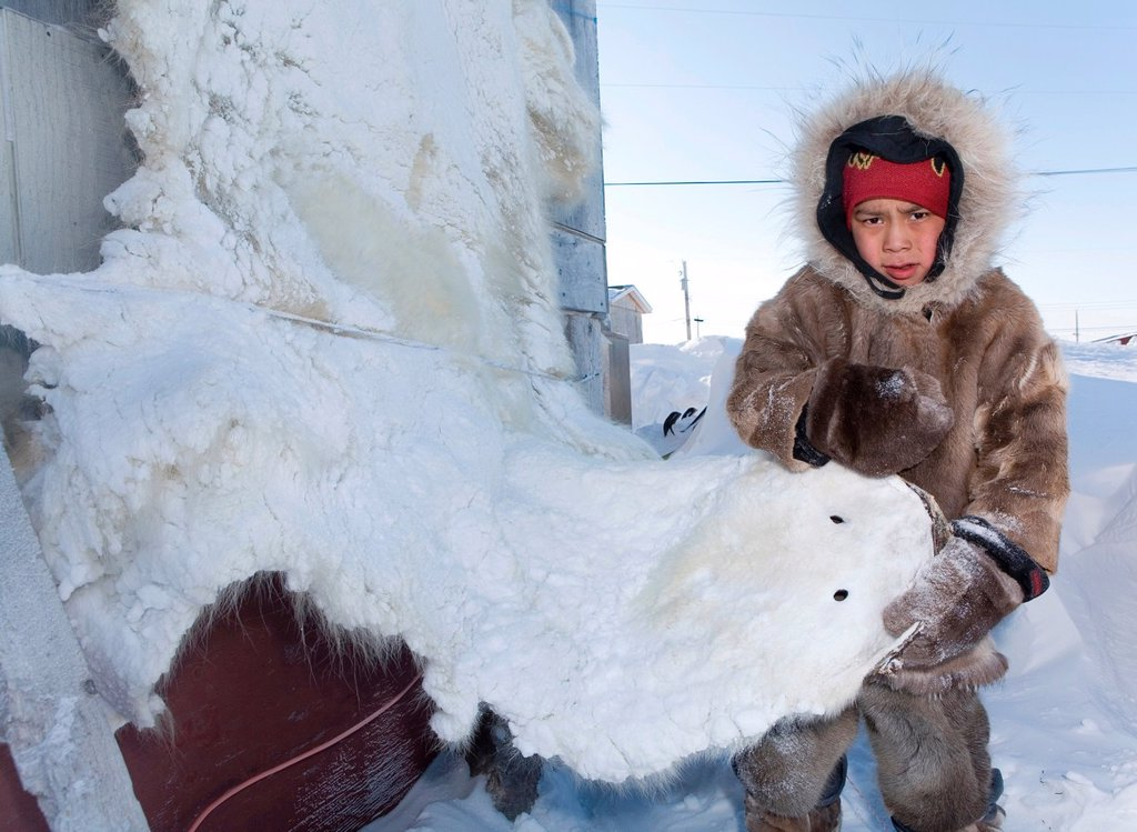 Gojahaven is a town in the far north of canada in 1000 where Inuits living Traditionally, Inuits hunt all kind of animals meant for their daily food consumption Inuits hunt polabears, seals, snowfoxes, fish, rabits etc The meat is eaten and the fur used f : Stock Photo