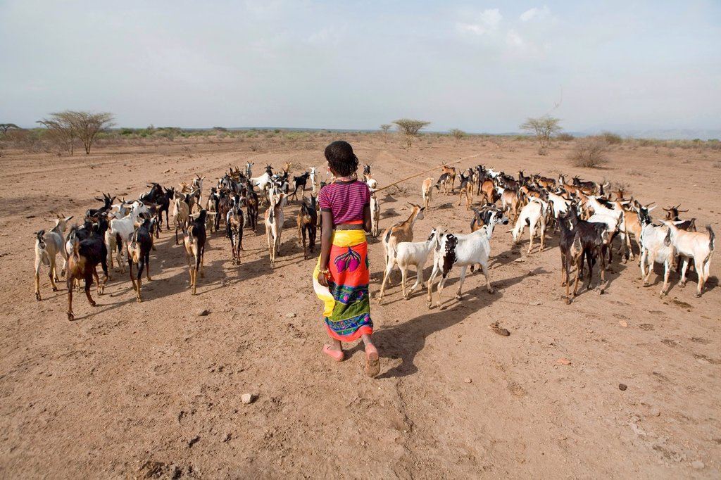 Stock Photo: 1566-1073662 Ethiopian people living in the North of the country are related to Somali people They are nomadic and live from cattle farming Most of them however, live in a village Girls and women have the responsibility of milking the cows because too little pasture,