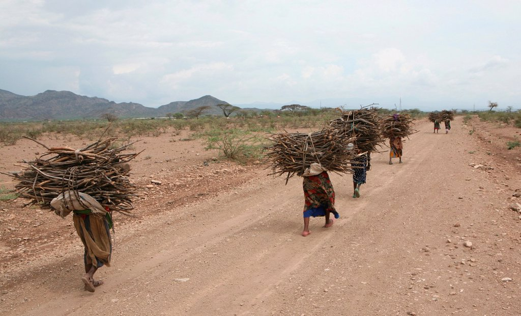 Stock Photo: 1566-1073664 Ethiopian girls collect firewood for cooking Due to global warming and change in climate, there are less trees and therefore less firewood available