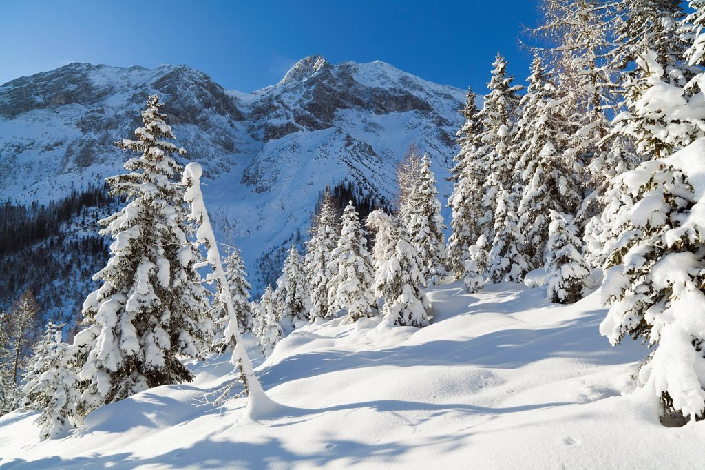 Stock Photo: 1566-1074701 Valley Gaistal with snow during deep winter in Tyrol, Austria Mountain forest with snowed in trees with the Mieminger Crest and peak Hohe Munde as background Valley Gaistal is during summer and winter a well known and popular hiking biking climbing and sk. Valley Gaistal with snow during deep winter in Tyrol, Austria Mountain forest with snowed in trees with the Mieminger Crest and peak Hohe Munde as background Valley Gaistal is during summer and winter a well known and popular hiking biking cli