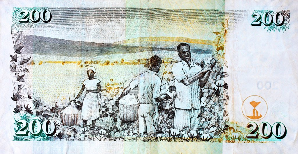 cotton harvest on a kenya shilling note : Stock Photo