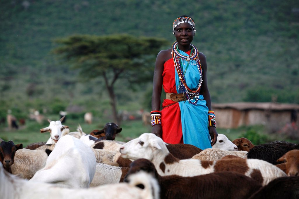 Stock Photo: 1566-1075720 Ngoiroro is a village of 200 inhabitants, all belonging to the Massai Tribe The village lays right in the rift valley, south of Nairobi against the tanzanian border The Massai live very close to nature and their animals The cows and goats are more importa