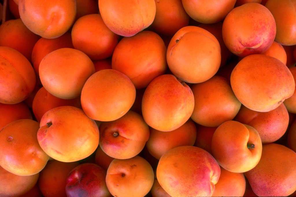 Stock Photo: 1566-1076490 Apricots