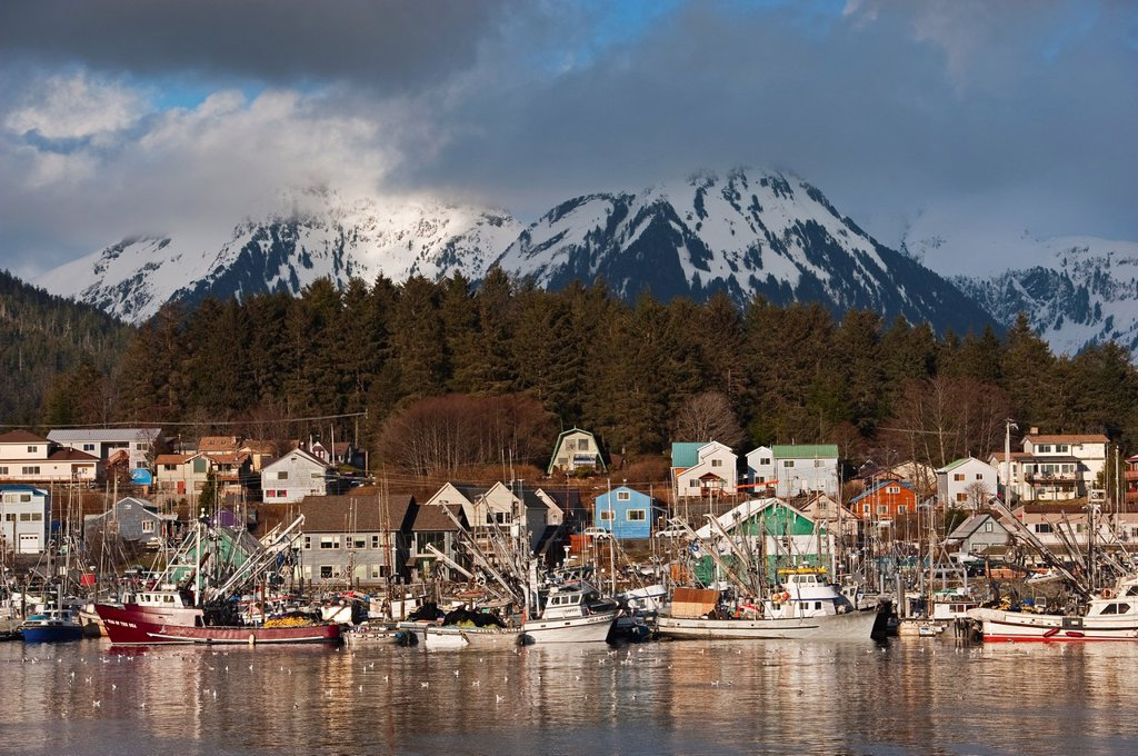 Pacific herring Clupea pallasii sac roe fishing fleet congregating in Sitka, Alaska´s harbors in preparation for the fishery opening. : Stock Photo