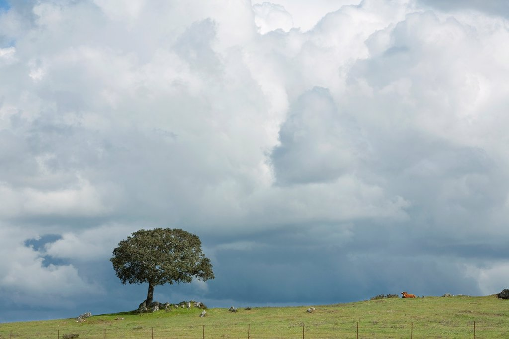 Stock Photo: 1566-1079125 Biosphere Reserve of Sierra de Béjar and Francia  Stormy clouds over a dehesa in La Sierpe  Salamanca Province  Castilla y León  Spain