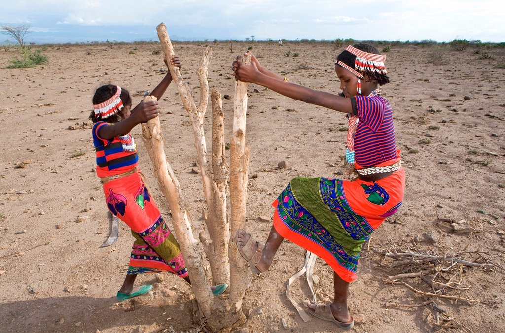 Ethiopian girls collect firewood for cooking Due to global warming and change in climate, there are less trees and therefore less firewood available : Stock Photo