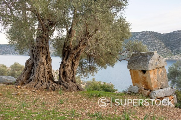 Stock Photo: 1566-1080398 Lycian rock tomb and ancient olive tree, Kaleköy, Üçagiz Teimiussa, Antalya Province, Turkey