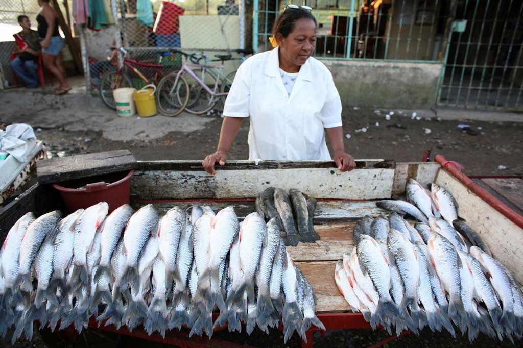 Stock Photo: 1566-1081368 Fishing is the main income of the population near the river Magdalena
