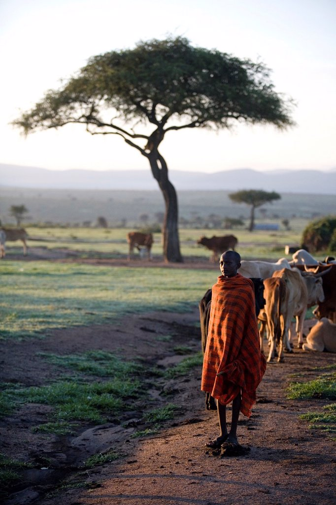 Stock Photo: 1566-1082808 Ngoiroro is a village of 200 inhabitants, all belonging to the Massai Tribe The village lays right in the rift valley, south of Nairobi against the tanzanian border The Massai live very close to nature and their animals The cows and goats are more importa