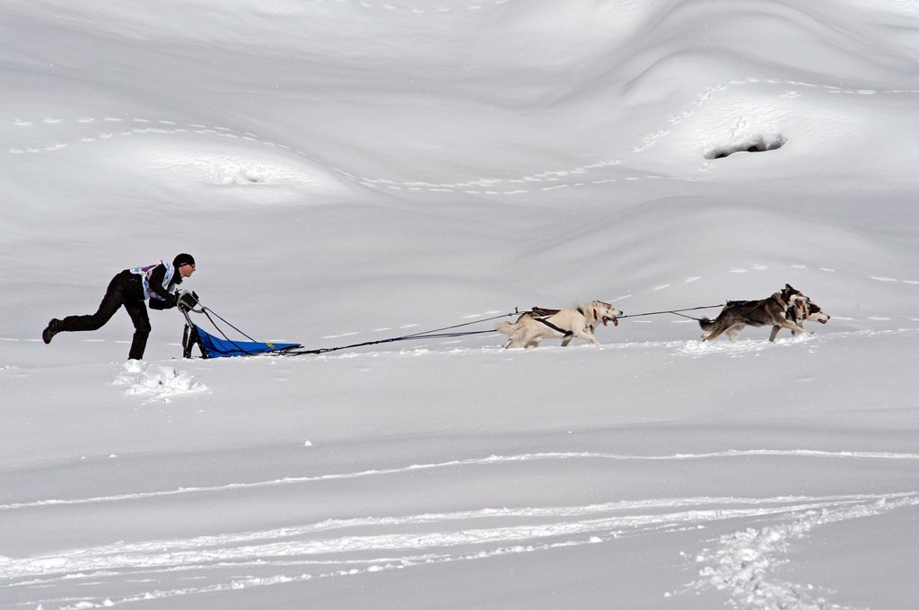 Dog Sled Races, Gadmen, Bernese Oberland, Switzerland : Stock Photo